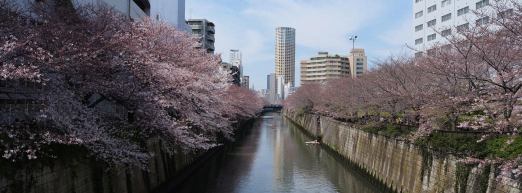 37.5 Hours in Tokyo